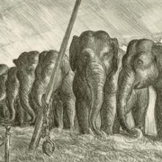 CH4051_Elephants72