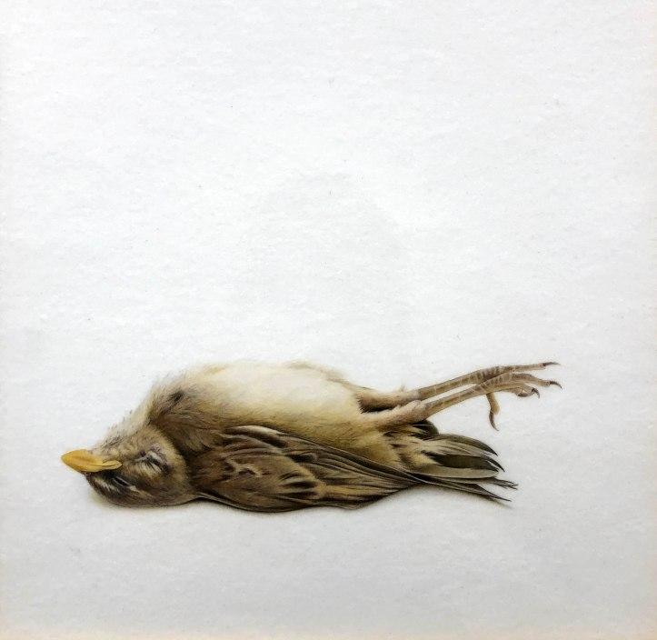 Very Little Bird (After Chavez)